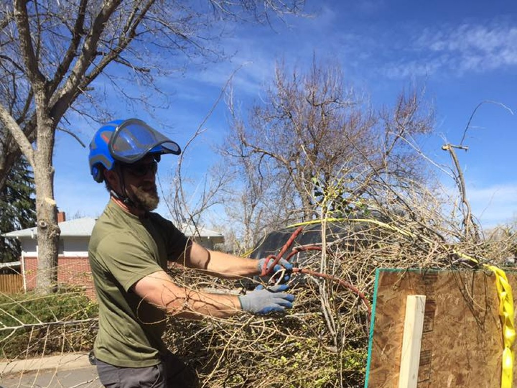 Trimming and pruning service